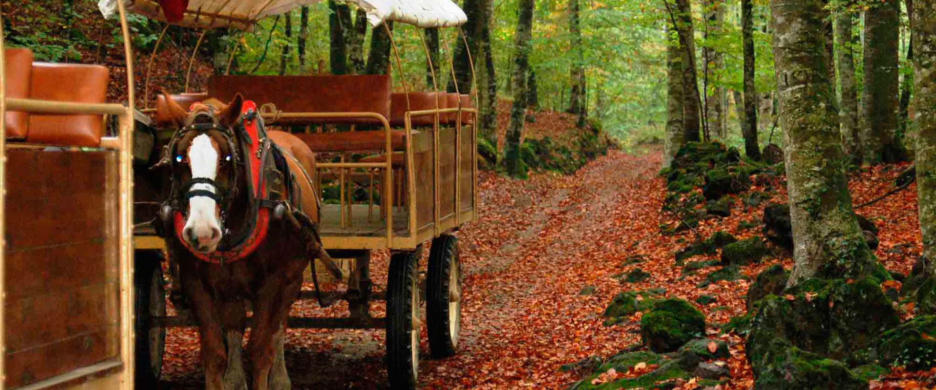 Stay with us and visit La Fageda d'en Jordà (a beech forest) on a carriage